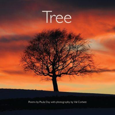 Andalucia tree