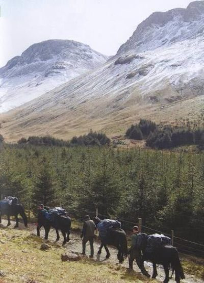 Fell ponies working for the national park