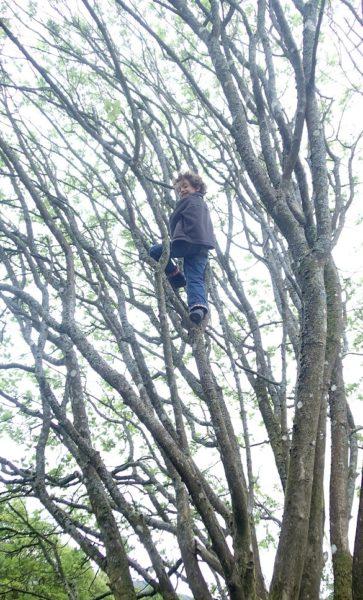 Orin tree climbing
