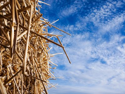 Straw and sky